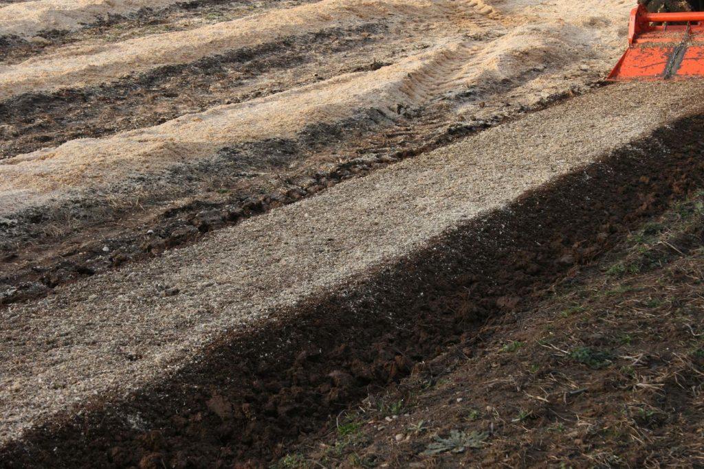 Закладка плантации голубики с нуля: руководство по подготовке